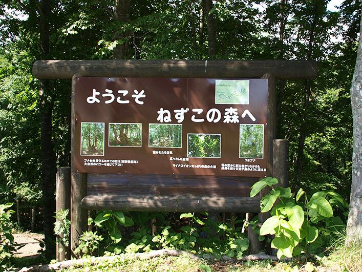 白馬岩岳マウンテンリゾート トレッキング(ねずこの森)