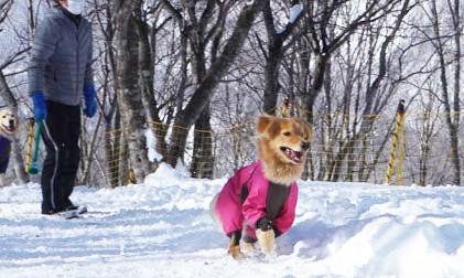 IWATAKE WHITE PARK DOG RUN